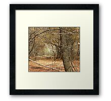 Fall Mystery Framed Print