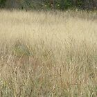 Beauty of Fall Grasses by Navigator