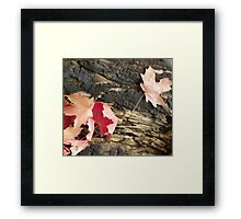 Fall Contrast Framed Print