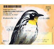 Clemson Warbler Photographic Print