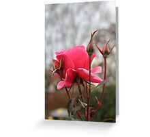 Fall Rose Greeting Card