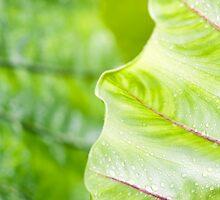 Edge of a Leaf by jayneeldred