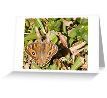 Meadow Argus Butterfly - Patterns Greeting Card