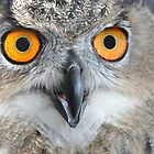 Eurasian Eagle Owl by Poete100