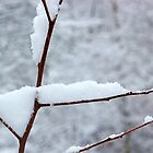 Snowy Twig 10 by marybedy