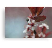 Blossom 10 Canvas Print