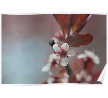 Blossom 10 Poster
