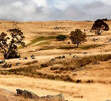 Australian Open Country Landscape by jwwallace
