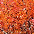 Autumn Leaves by WeeZie