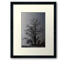 """""""Lone Oak"""" Framed Print"""