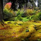 Colorful Carpet of Moss in Benmore Botanical Garden by JennyRainbow