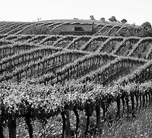Barossa Vineyard by May-Le Ng