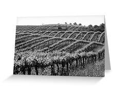 Barossa Vineyard Greeting Card