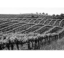 Barossa Vineyard Photographic Print