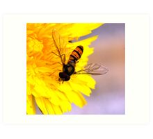 Hoverfly. Art Print