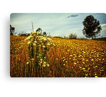 Feather Flowers on The Echidna Trail Canvas Print