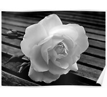 Solitary Rose. Poster