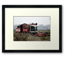 Sugarbeet harvest. Framed Print