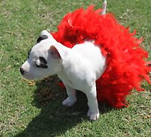 I can wear a TuTu if I want to! by Vicki Childs