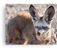 Bat-eared fox faceshot Canvas Print