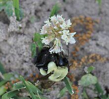 Buzzybee by Esporeon