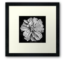 Flowerscapes - BW Waterdrops Framed Print