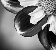 Flowerscapes - BW Dahlia by lesslinear