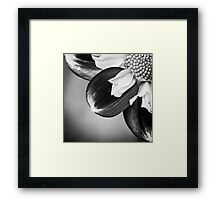 Flowerscapes - BW Dahlia Framed Print