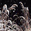 Snowy Grass by Jokaylena Leonard
