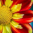 Flowerscapes - Dahlia Detail by lesslinear