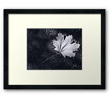 The Leaf, by Darren Richards Framed Print