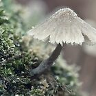Frosty Mushroom by April Koehler