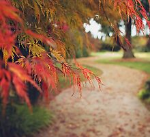 Fall Path by dbrender