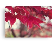 Fire Red Leaves Canvas Print