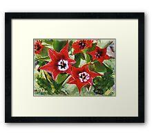 Xmas Tulips Framed Print