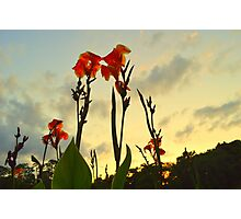 Flowers Reaching Sky Photographic Print