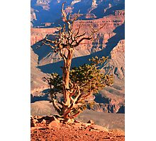 Weatherd old Juniper Tree on the Canyon Rim Photographic Print