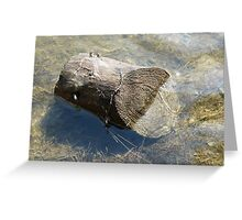 Annual Rings under water Greeting Card