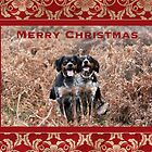 Christmas Card 4 by Australian Brittanys
