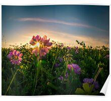 Sunset Through The Purple Vetch Poster