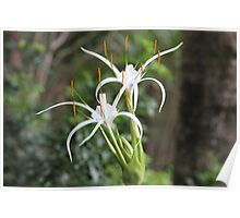 Spider Plant Growing Wild Poster