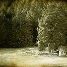wendi's cabin by marcwellman2000