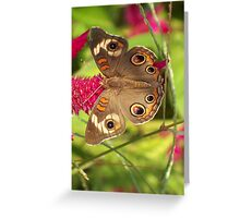 Beautiful Buckeye Greeting Card