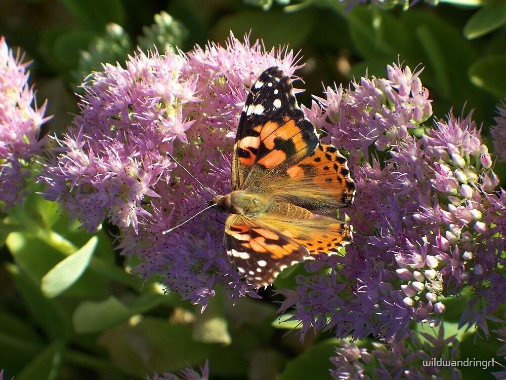 Beauty on Blooms by wildwandringrl