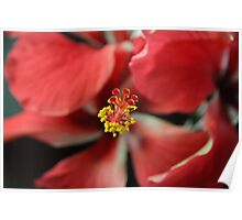 Stamen of the Hibiscus Flower Poster