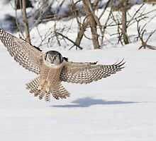 The art of swooping by Heather King