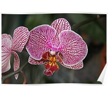 October Orchid Poster