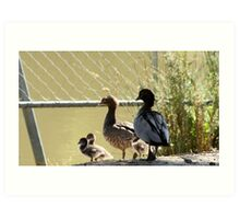 Wood duck family outing Art Print