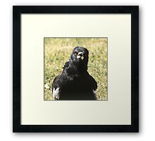 Look at me.... Framed Print