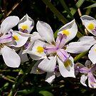Irises by sedge808